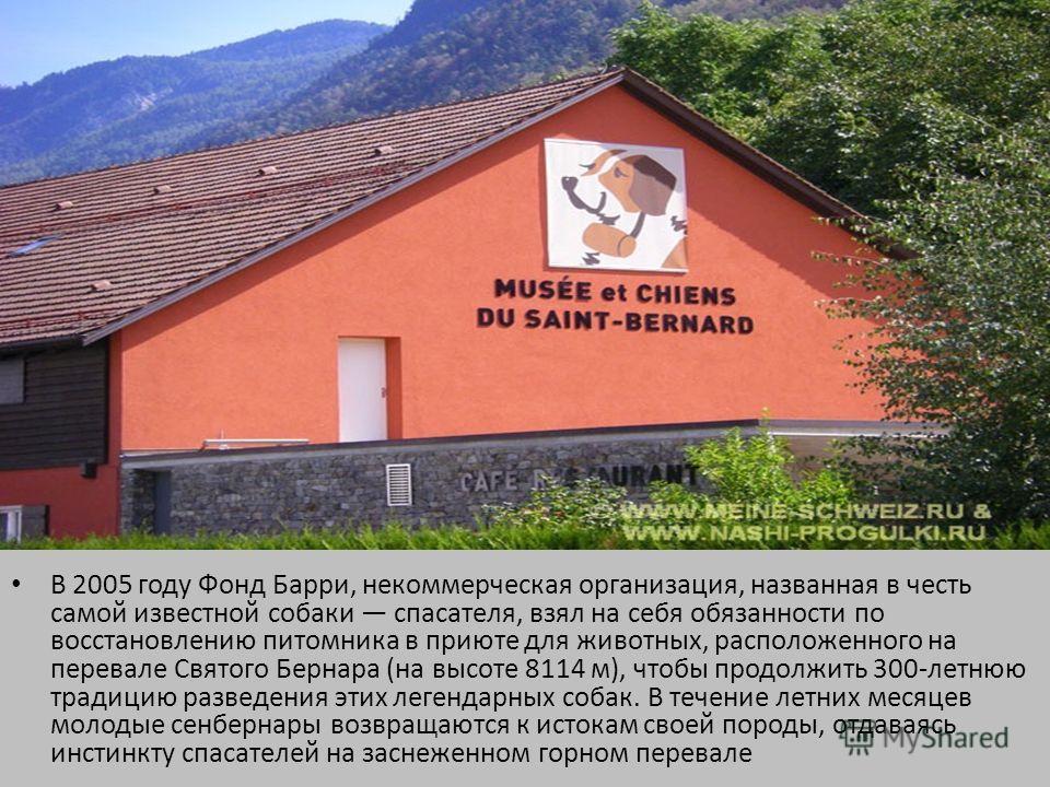 В 2005 году Фонд Барри, некоммерческая организация, названная в честь самой известной собаки спасателя, взял на себя обязанности по восстановлению питомника в приюте для животных, расположенного на перевале Святого Бернара (на высоте 8114 м), чтобы п