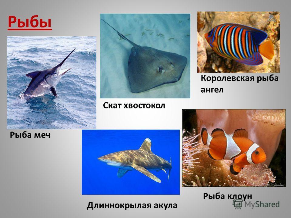 Рыбы Рыба клоун Скат хвостокол Длиннокрылая акула Рыба меч Королевская рыба ангел