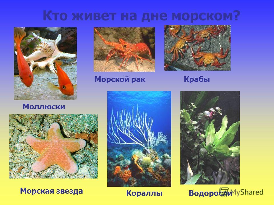 Кто живет на дне морском? Моллюски Кораллы Морская звезда Крабы Морской рак Водоросли