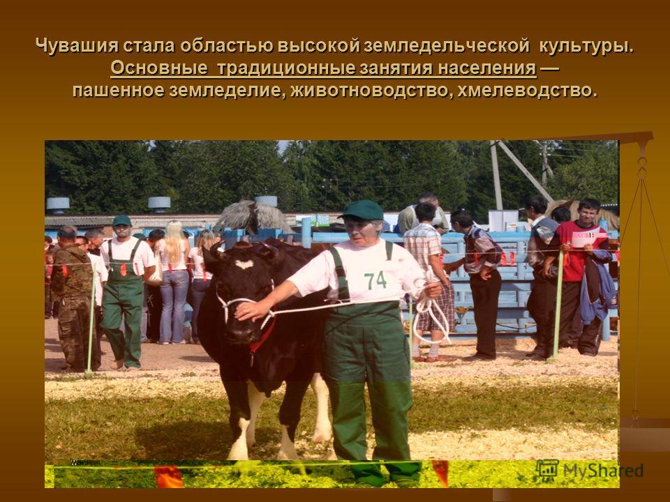 Чувашия стала областью высокой земледельческой культуры. Основные традиционные занятия населения пашенное земледелие, животноводство, хмелеводство.