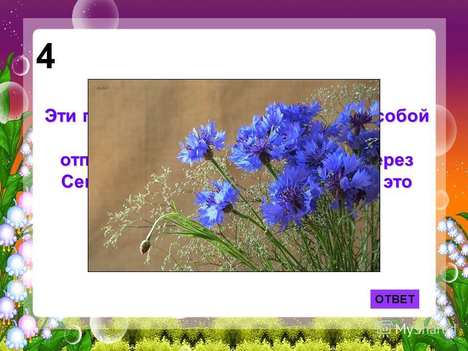 ОТВЕТ 4 Эти простые полевые цветы взял с собой в кабину самолёта В.П.Чкалов, отправляясь в 1937 году в полёт через Северный полюс в Америку. Какие это были цветы?