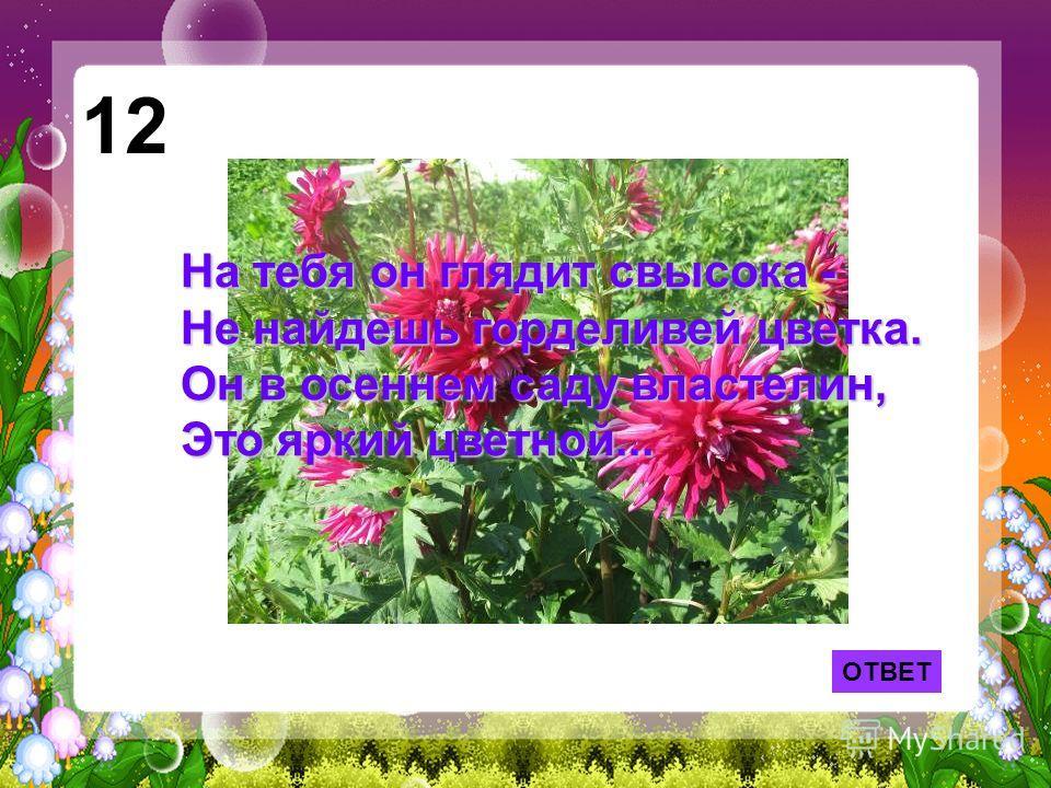 ОТВЕТ 12 На тебя он глядит свысока - Не найдешь горделивей цветка. Он в осеннем саду властелин, Это яркий цветной...