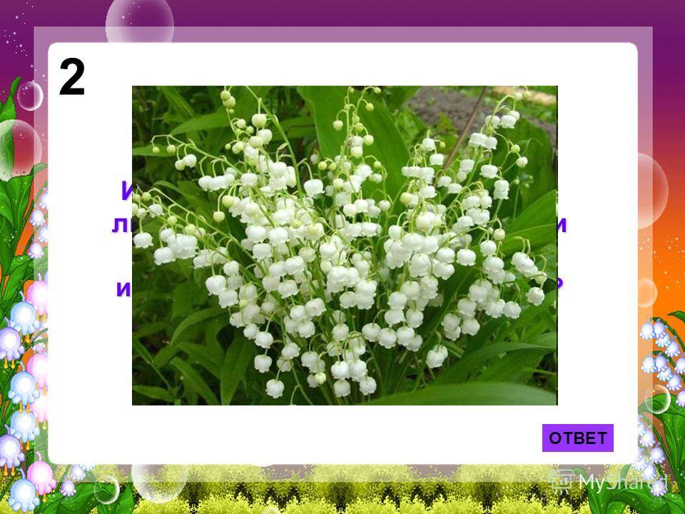 2 Именно эти цветы принес своей любимой герой песни Фадеевой и Фельцмана, а «не тюльпаны и не лилии». Какие же это цветы? ОТВЕТ