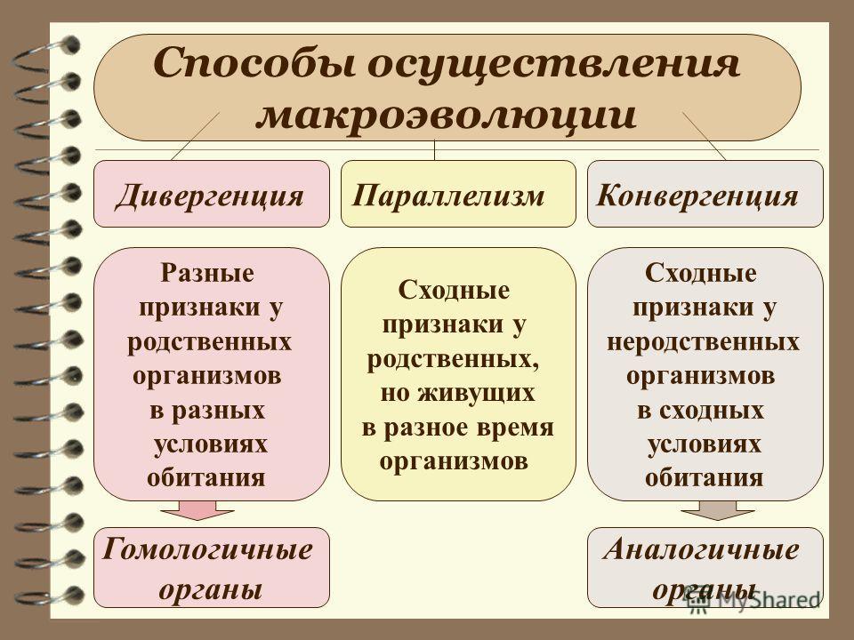 Способы осуществления макроэволюции Дивергенция ПараллелизмКонвергенция Разные признаки у родственных организмов в разных условиях обитания Сходные признаки у родственных, но живущих в разное время организмов Сходные признаки у неродственных организм