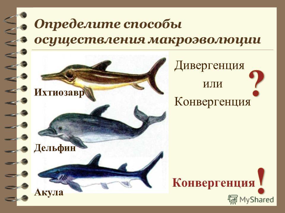 Определите способы осуществления макроэволюции Дивергенция или Конвергенция Ихтиозавр Акула Дельфин