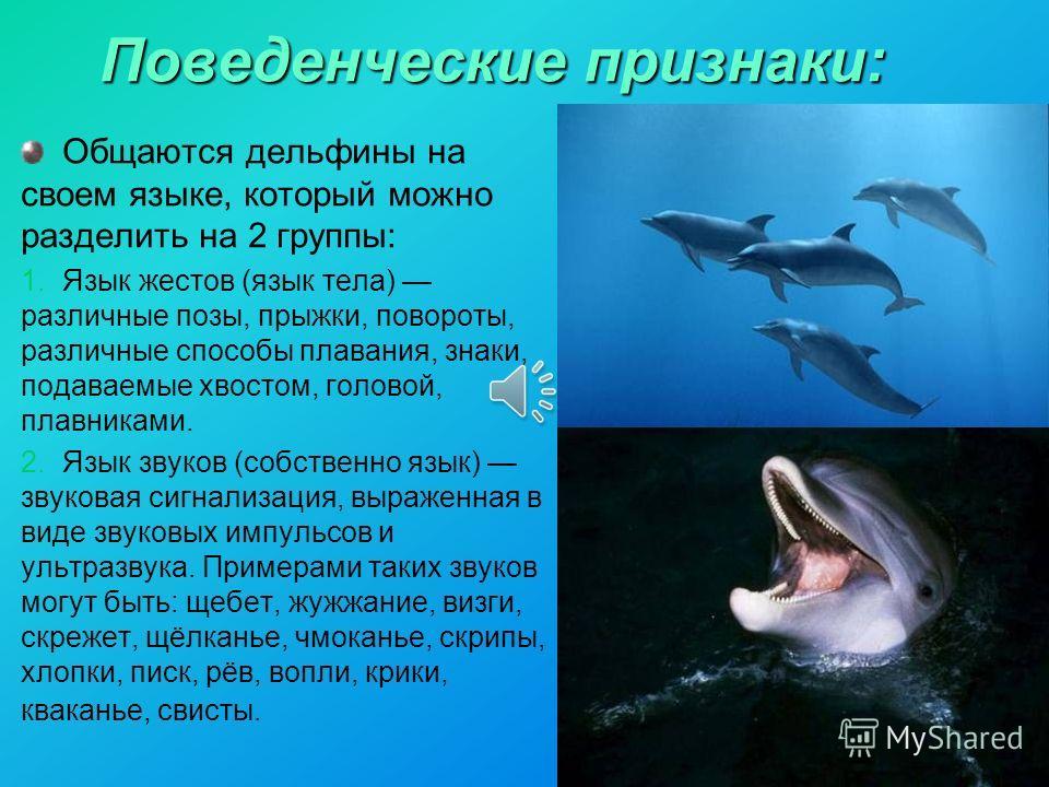 Поведенческие признаки: Общаются дельфины на своем языке, который можно разделить на 2 группы: 1. Язык жестов (язык тела) различные позы, прыжки, повороты, различные способы плавания, знаки, подаваемые хвостом, головой, плавниками. 2. Язык звуков (со