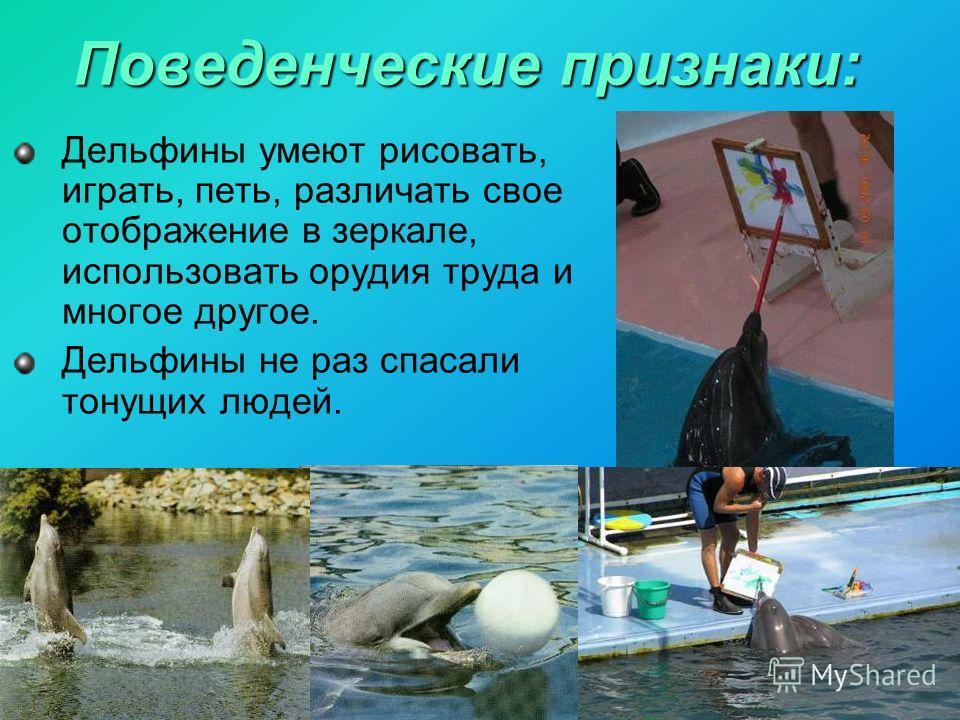 Дельфины умеют рисовать, играть, петь, различать свое отображение в зеркале, использовать орудия труда и многое другое. Дельфины не раз спасали тонущих людей.