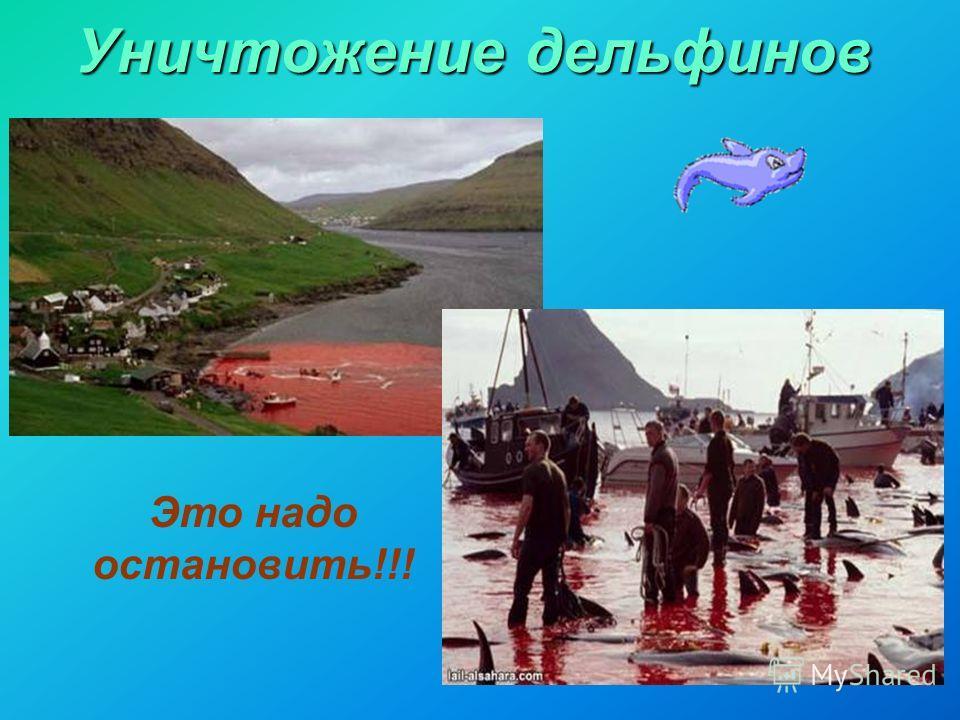 Уничтожение дельфинов Это надо остановить!!!