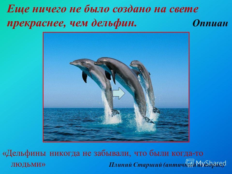 «Дельфины никогда не забывали, что были когда-то людьми» Плиний Старший (античный историк) Еще ничего не было создано на свете прекраснее, чем дельфин. Оппиан