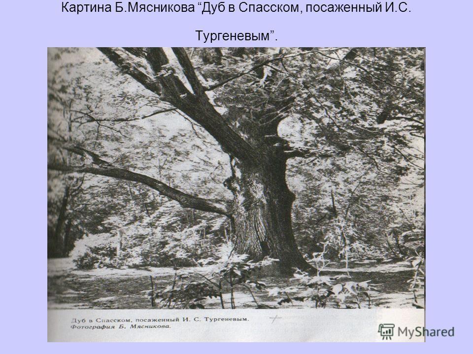 Картина Б.Мясникова Дуб в Спасском, посаженный И.С. Тургеневым.
