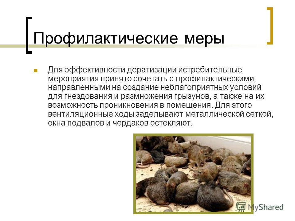 Профилактические меры Для эффективности дератизации истребительные мероприятия принято сочетать с профилактическими, направленными на создание неблагоприятных условий для гнездования и размножения грызунов, а также на их возможность проникновения в п