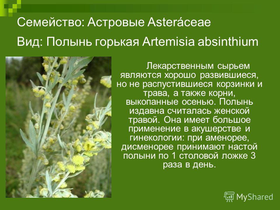 Семейство: Астровые Asteráceae Вид: Полынь горькая Artemisia absinthium Лекарственным сырьем являются хорошо развившиеся, но не распустившиеся корзинки и трава, а также корни, выкопанные осенью. Полынь издавна считалась женской травой. Она имеет боль