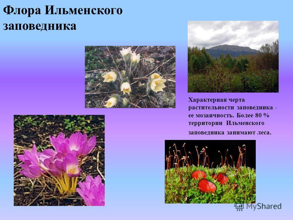 Флора Ильменского заповедника Характерная черта растительности заповедника - ее мозаичность. Более 80 % территории Ильменского заповедника занимают леса.