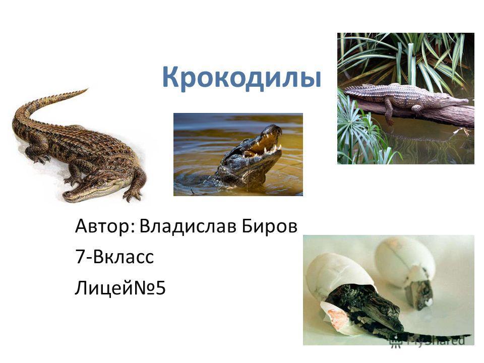 Крокодилы Автор: Владислав Биров 7-Вкласс Лицей 5