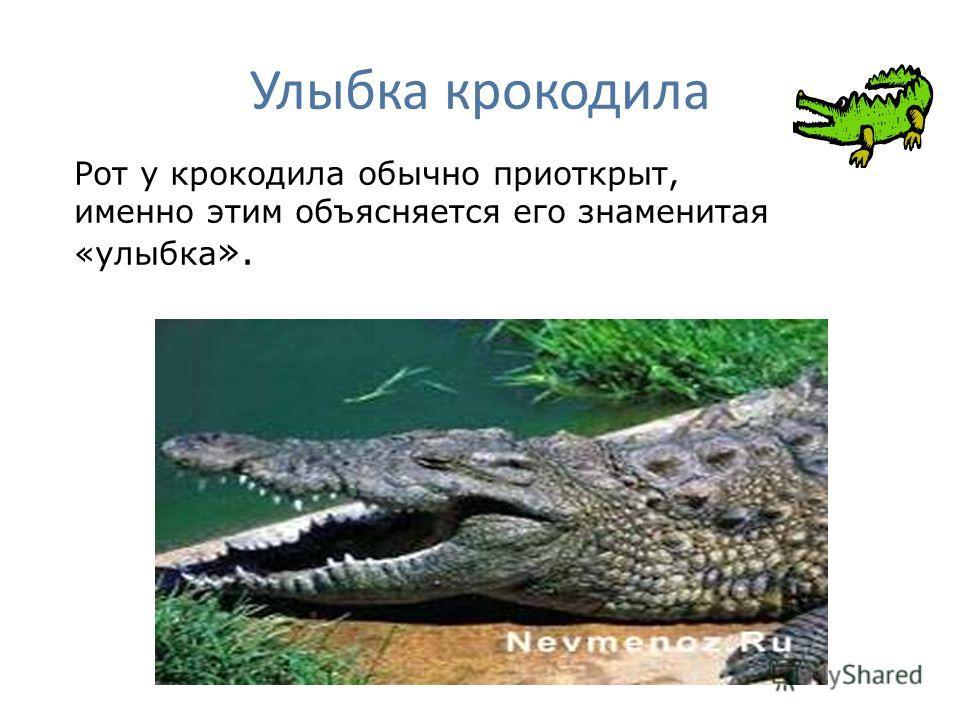 Улыбка крокодила Рот у крокодила обычно приоткрыт, именно этим объясняется его знаменитая «улыбка ».