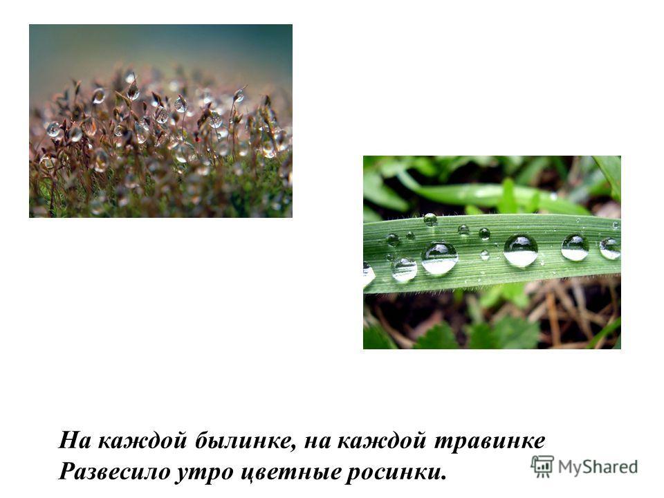 На каждой былинке, на каждой травинке Развесило утро цветные росинки.