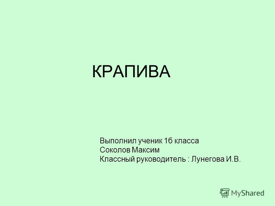 КРАПИВА Выполнил ученик 1 б класса Соколов Максим Классный руководитель : Лунегова И.В.