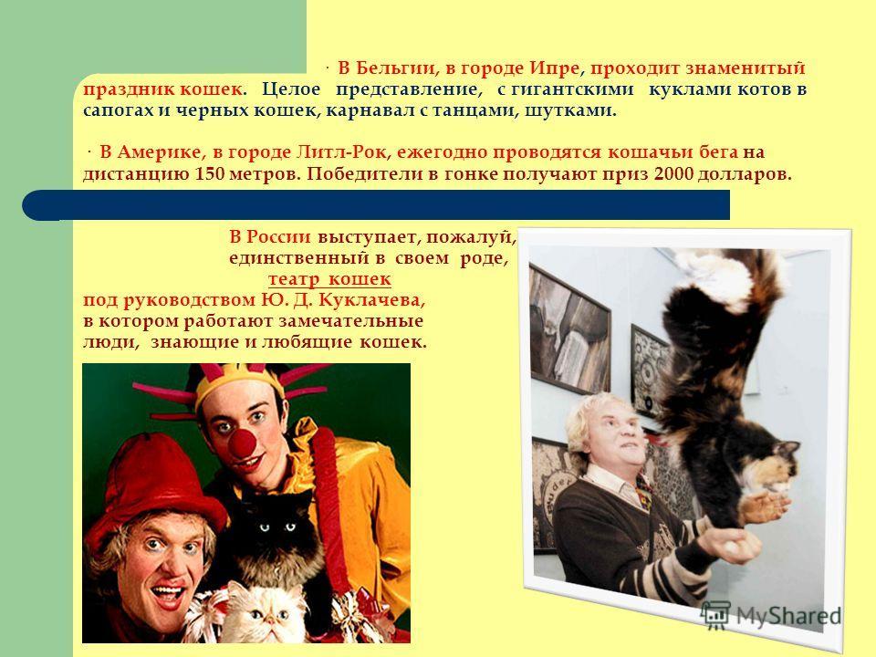 · В Бельгии, в городе Ипре, проходит знаменитый праздник кошек. Целое представление, с гигантскими куклами котов в сапогах и черных кошек, карнавал с танцами, шутками. · В Америке, в городе Литл-Рок, ежегодно проводятся кошачьи бега на дистанцию 150