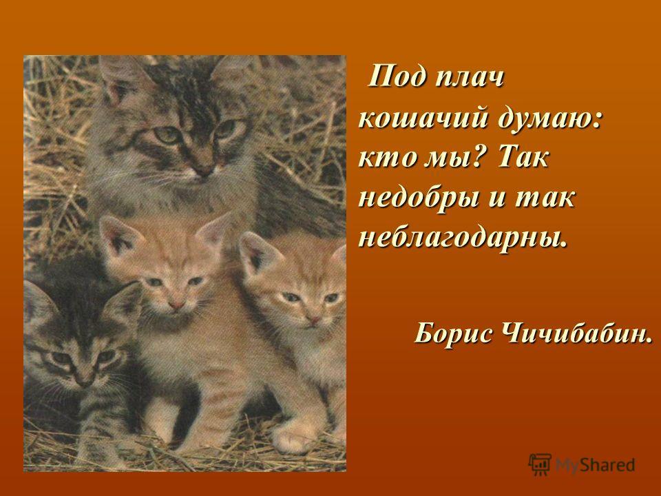 Под плач кошачий думаю: кто мы? Так недобры и так неблагодарны. Борис Чичибабин.