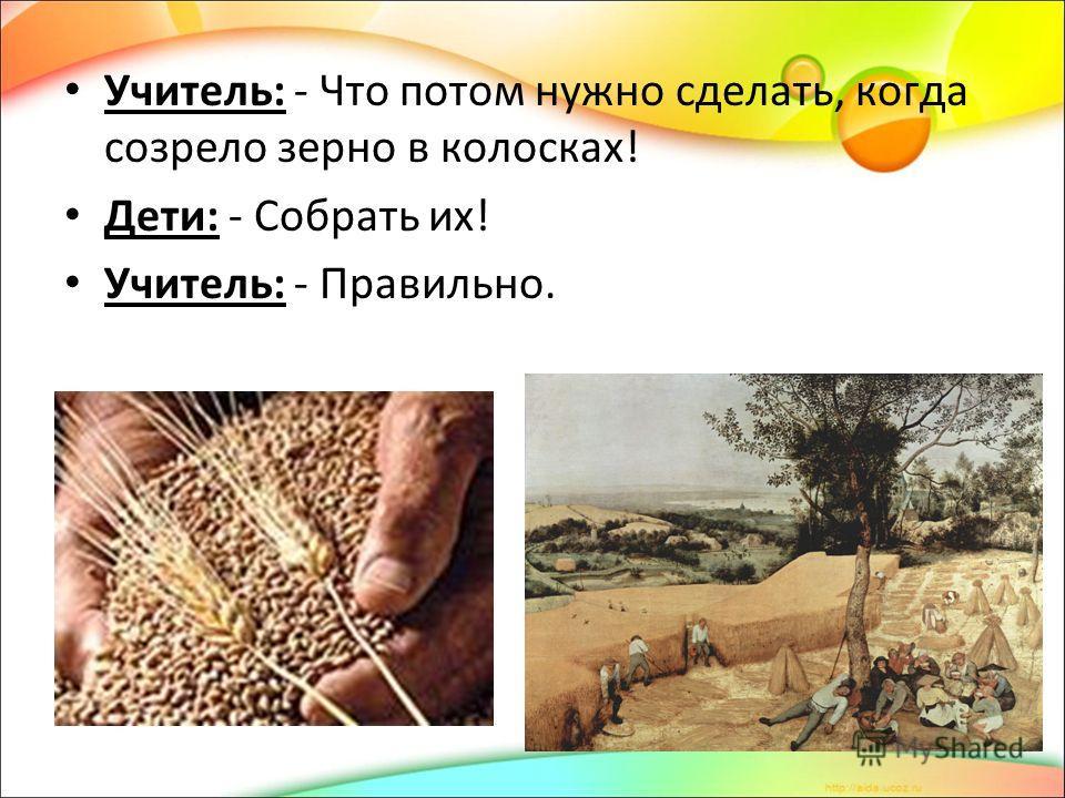 Учитель: - Что потом нужно сделать, когда созрело зерно в колосках! Дети: - Собрать их! Учитель: - Правильно.