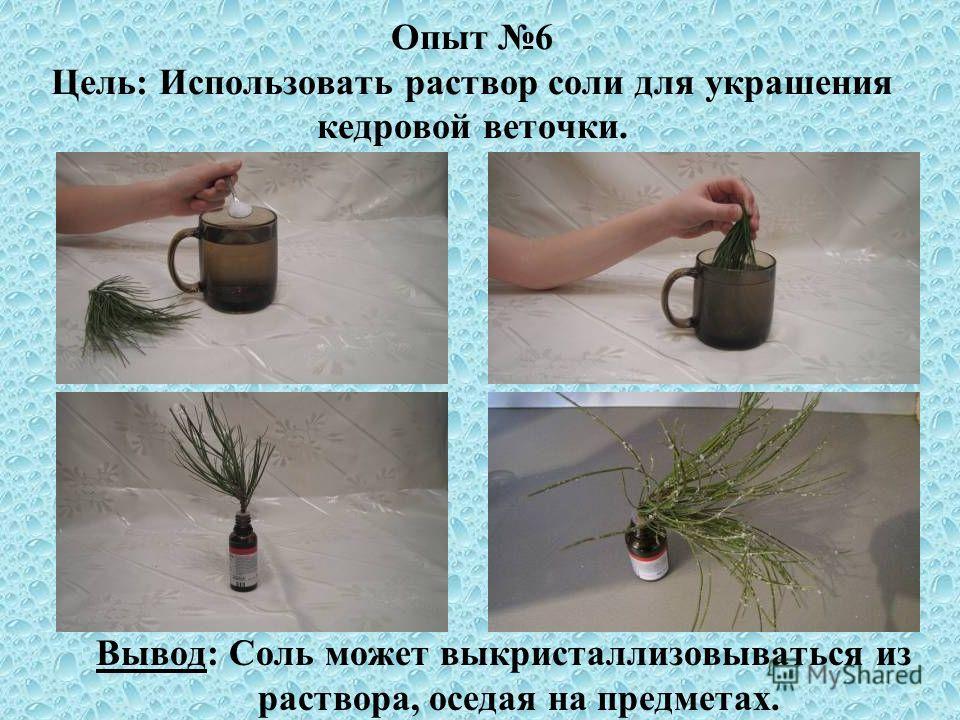 Опыт 6 Цель: Использовать раствор соли для украшения кедровой веточки. Вывод: Соль может выкристаллизовываться из раствора, оседая на предметах.