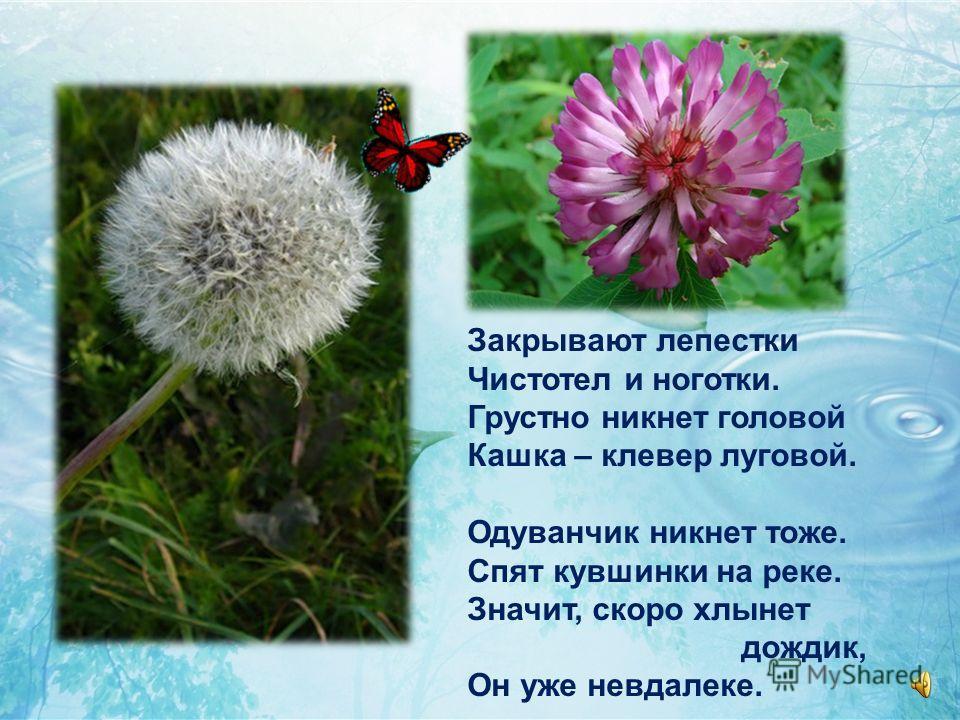 В золотых цветах опушка, Пчёлы водят хоровод. В камышах кричит лягушка: Из – за речки дождь идёт.