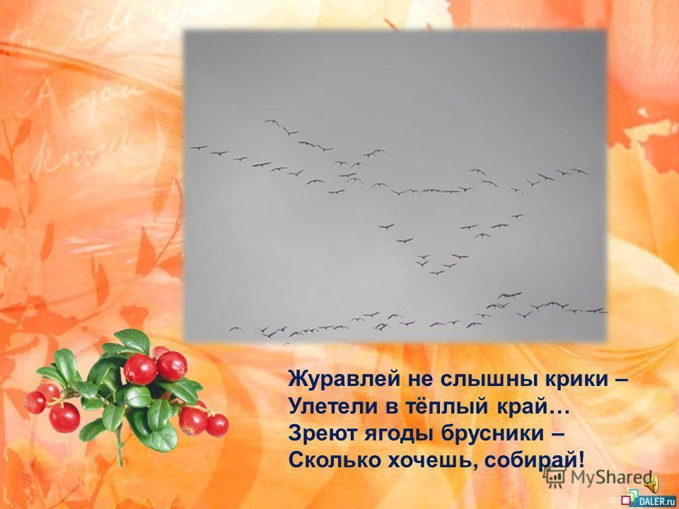 Между ёлок, между сосен Осторожно бродит осень. Осень – рыжая лисица – Красит в рыжий цвет леса. Но зелёного убора Не покрасить ей у бора: Для лисы остры и колки Леса хвойные иголки.