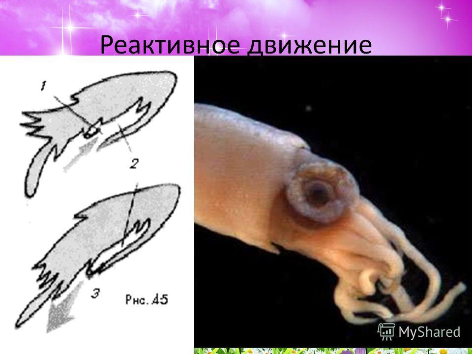 приспособления паразитов к жизни в организме хозяина