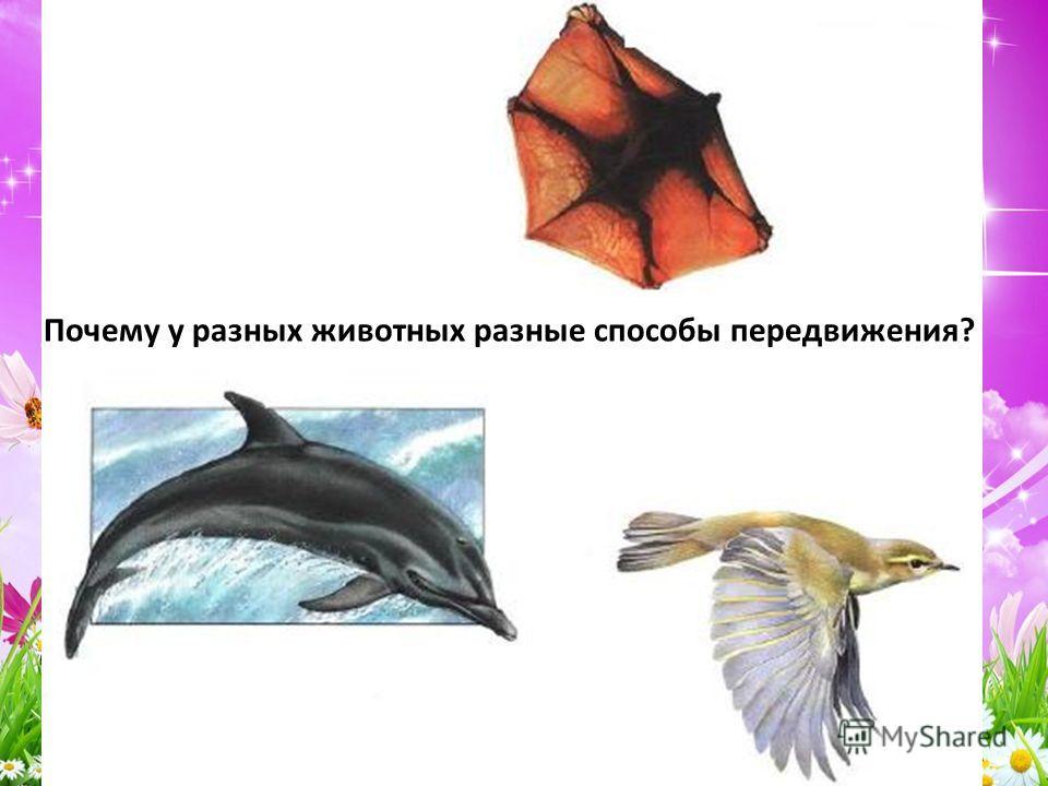 Почему у разных животных разные способы передвижения?