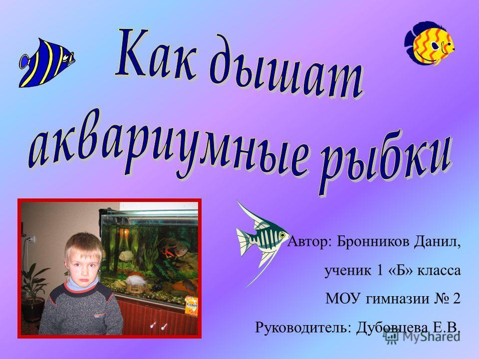 Автор: Бронников Данил, ученик 1 «Б» класса МОУ гимназии 2 Руководитель: Дубовцева Е.В.