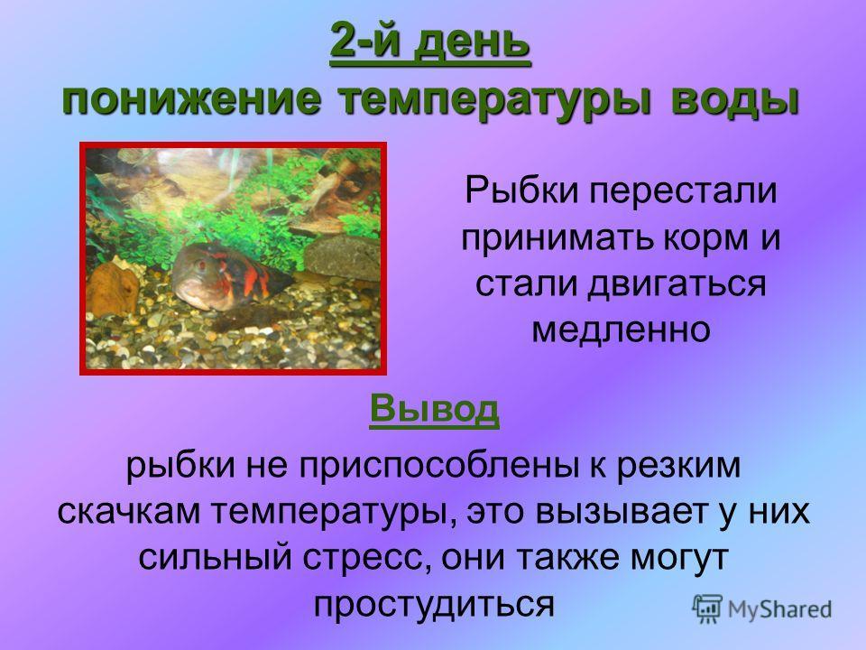 Рыбки перестали принимать корм и стали двигаться медленно 2-й день понижение температуры воды Вывод рыбки не приспособлены к резким скачкам температуры, это вызывает у них сильный стресс, они также могут простудиться