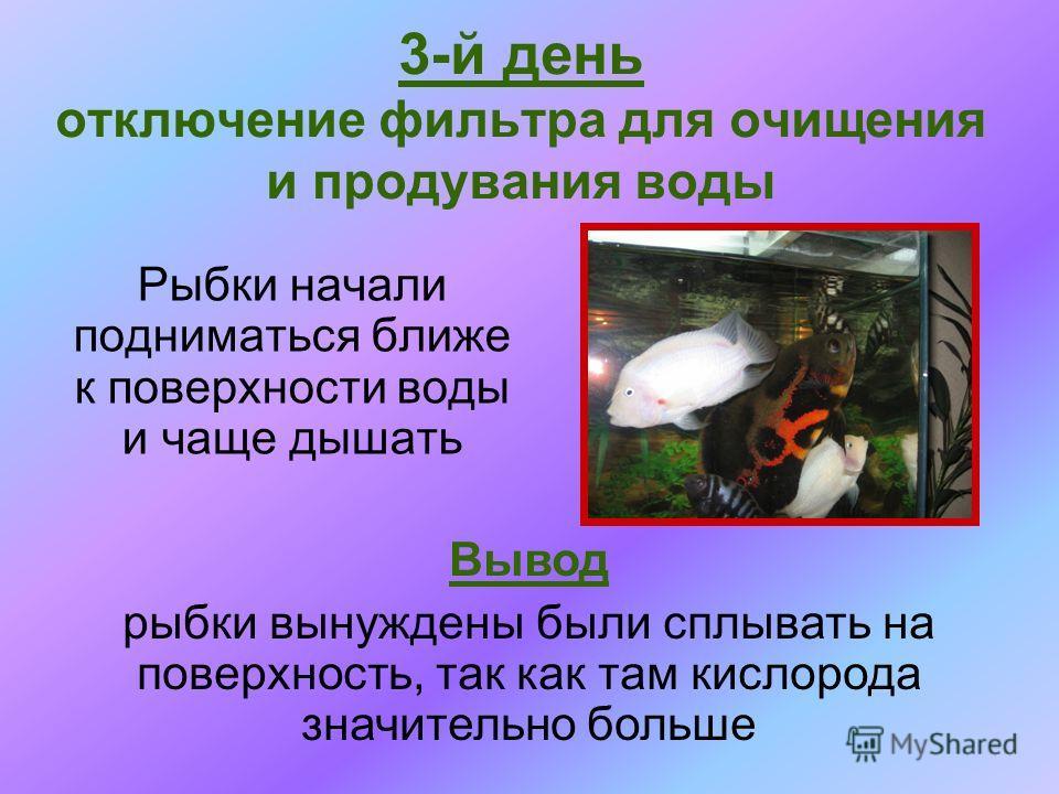 Рыбки начали подниматься ближе к поверхности воды и чаще дышать 3-й день отключение фильтра для очищения и продувания воды Вывод рыбки вынуждены были сплывать на поверхность, так как там кислорода значительно больше