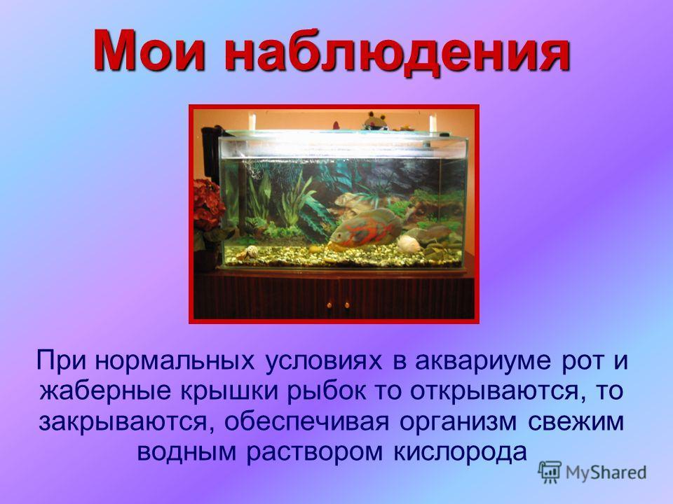 Мои наблюдения При нормальных условиях в аквариуме рот и жаберные крышки рыбок то открываются, то закрываются, обеспечивая организм свежим водным раствором кислорода