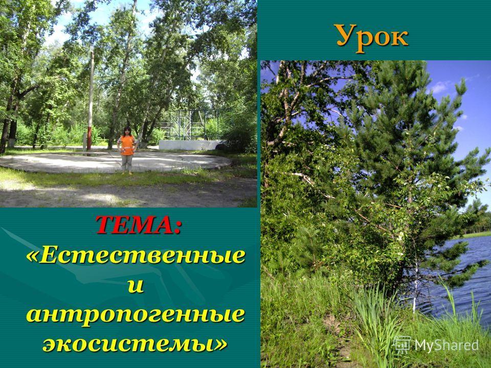 Урок ТЕМА: «Естественные и антропогенные экосистемы» ТЕМА: «Естественные и антропогенные экосистемы»
