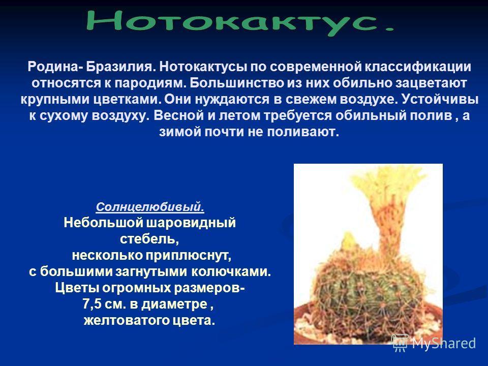 Родина- Бразилия. Нотокактусы по современной классификации относятся к пародиям. Большинство из них обильно зацветают крупными цветками. Они нуждаются в свежем воздухе. Устойчивы к сухому воздуху. Весной и летом требуется обильный полив, а зимой почт