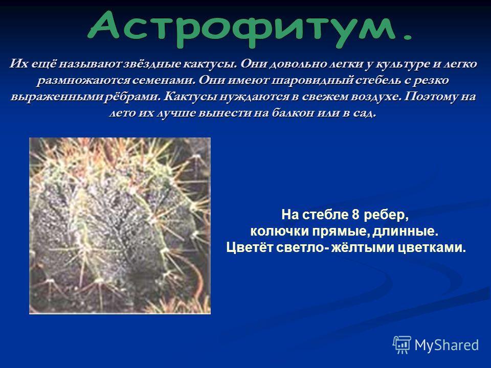 Их ещё называют звёздные кактусы. Они довольно легки у культуре и легко размножаются семенами. Они имеют шаровидный стебель с резко выраженными рёбрами. Кактусы нуждаются в свежем воздухе. Поэтому на лето их лучше вынести на балкон или в сад. На стеб