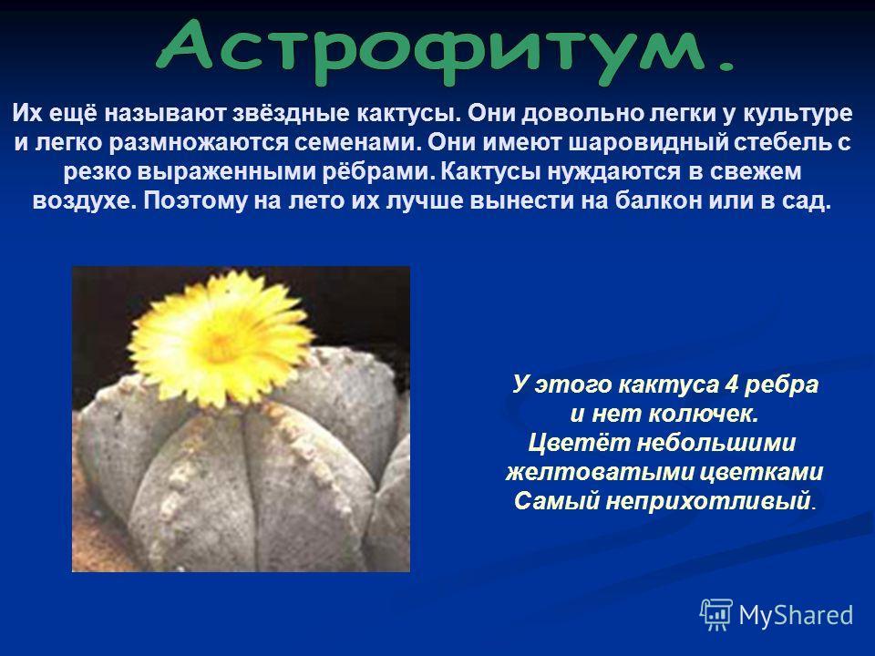Их ещё называют звёздные кактусы. Они довольно легки у культуре и легко размножаются семенами. Они имеют шаровидный стебель с резко выраженными рёбрами. Кактусы нуждаются в свежем воздухе. Поэтому на лето их лучше вынести на балкон или в сад. У этого