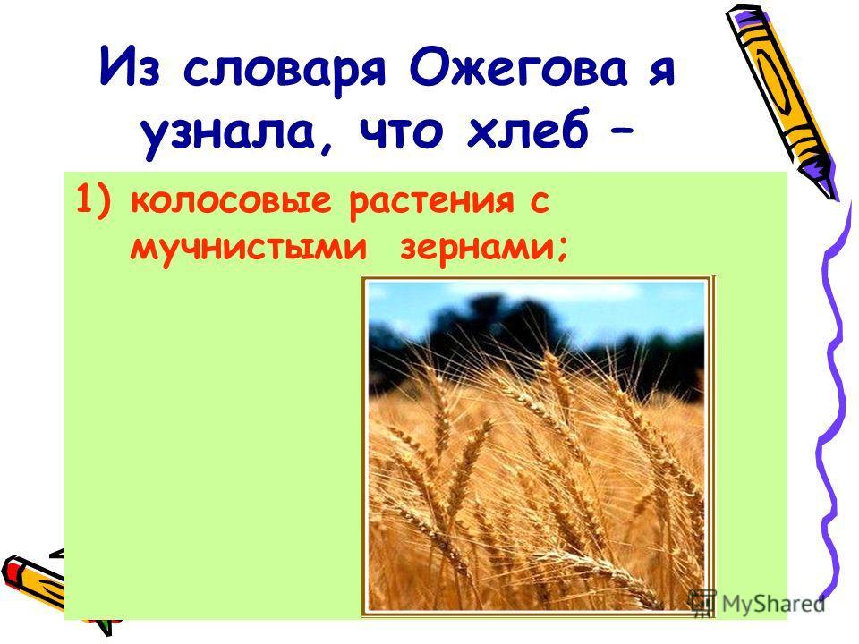 Из словаря Ожегова я узнала, что хлеб – 1)колосовые растения с мучнистыми зернами;