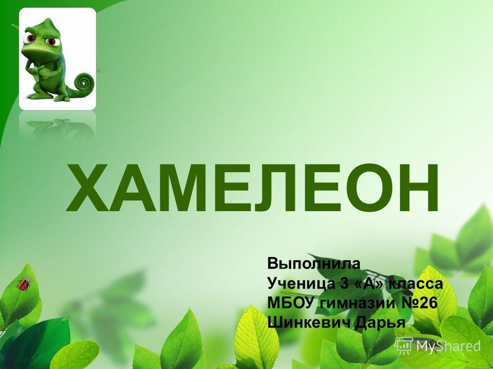 ХАМЕЛЕОН Выполнила Ученица 3 «А» класса МБОУ гимназии 26 Шинкевич Дарья