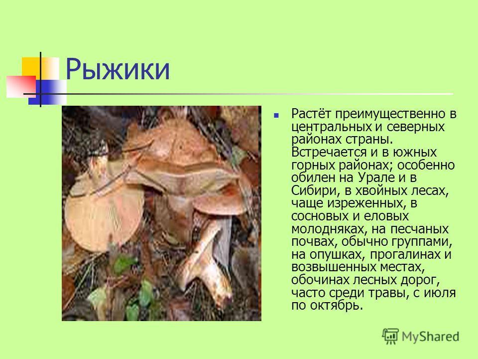 Рыжики Растёт преимущественно в центральных и северных районах страны. Встречается и в южных горных районах; особенно обилен на Урале и в Сибири, в хвойных лесах, чаще изреженных, в сосновых и еловых молодняках, на песчаных почвах, обычно группами, н