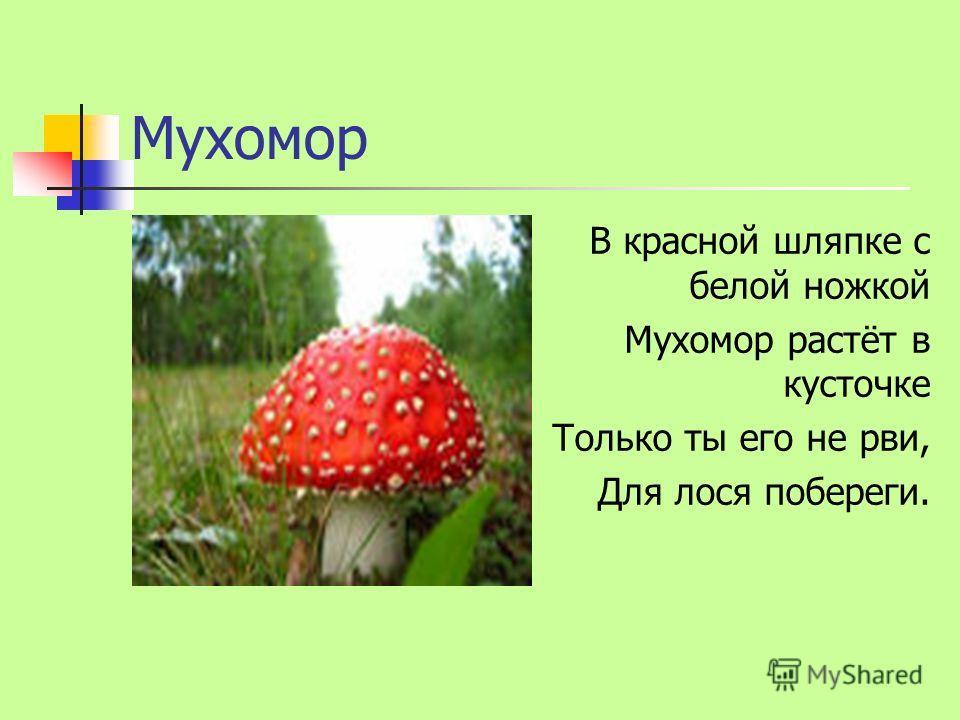 Мухомор В красной шляпке с белой ножкой Мухомор растёт в кусточке Только ты его не рви, Для лося побереги.