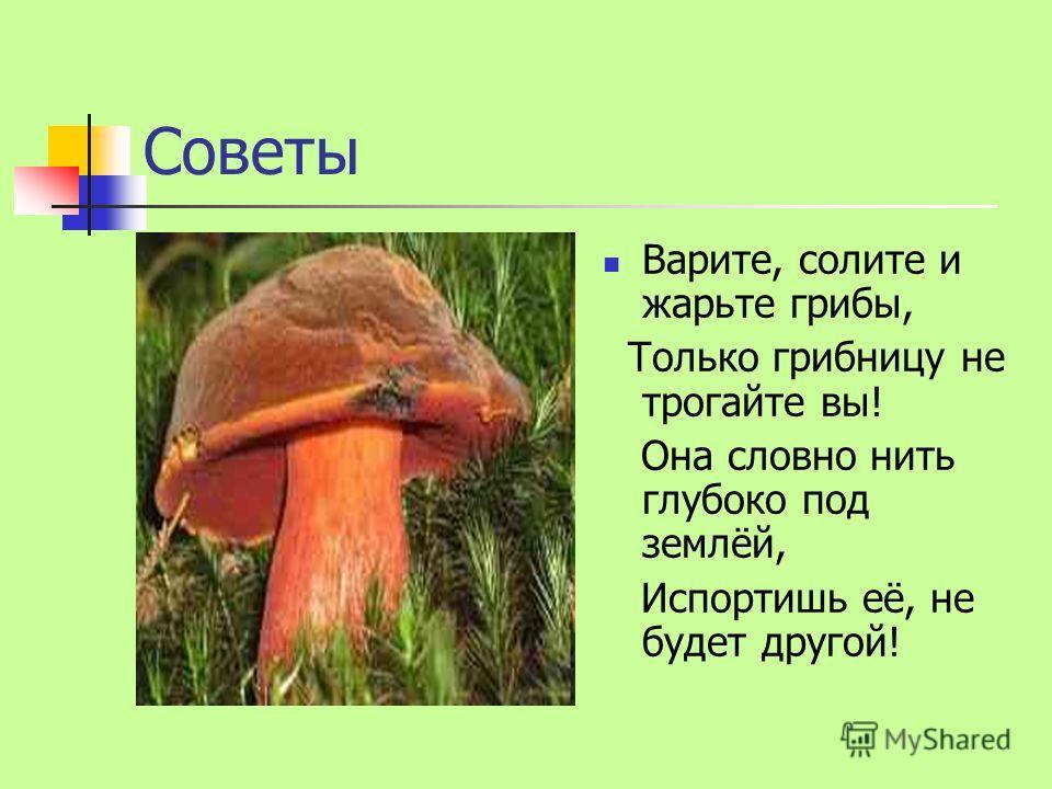 Советы Варите, солите и жарьте грибы, Только грибницу не трогайте вы! Она словно нить глубоко под землёй, Испортишь её, не будет другой!