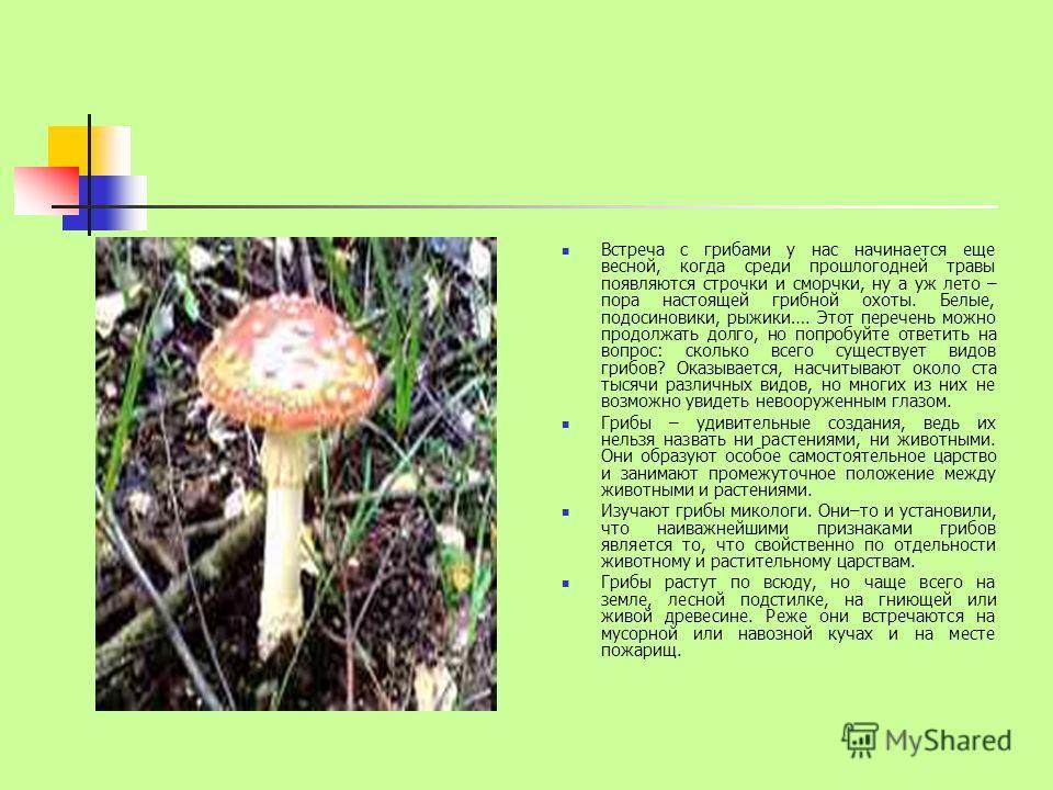 Встреча с грибами у нас начинается еще весной, когда среди прошлогодней травы появляются строчки и сморчки, ну а уж лето – пора настоящей грибной охоты. Белые, подосиновики, рыжики…. Этот перечень можно продолжать долго, но попробуйте ответить на воп