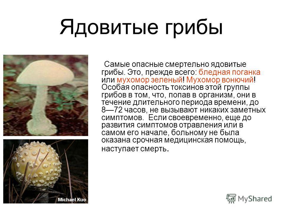 Ядовитые грибы Cамые опасные смертельно ядовитые грибы. Это, прежде всего: бледная поганка или мухомор зеленый! Мухомор вонючий! Особая опасность токсинов этой группы грибов в том, что, попав в организм, они в течение длительного периода времени, до