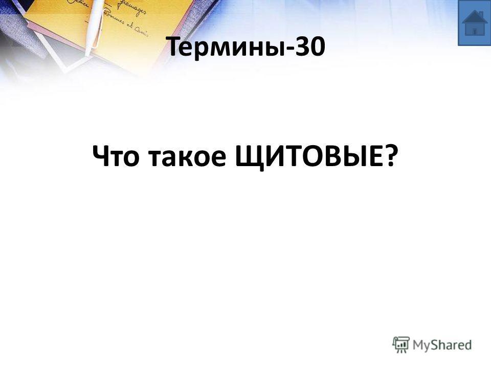 Термины-30 Что такое ЩИТОВЫЕ?