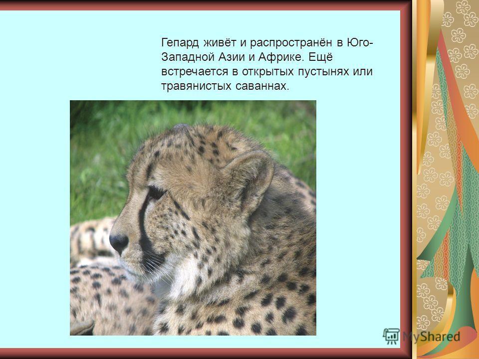Гепард живёт и распространён в Юго- Западной Азии и Африке. Ещё встречается в открытых пустынях или травянистых саваннах.