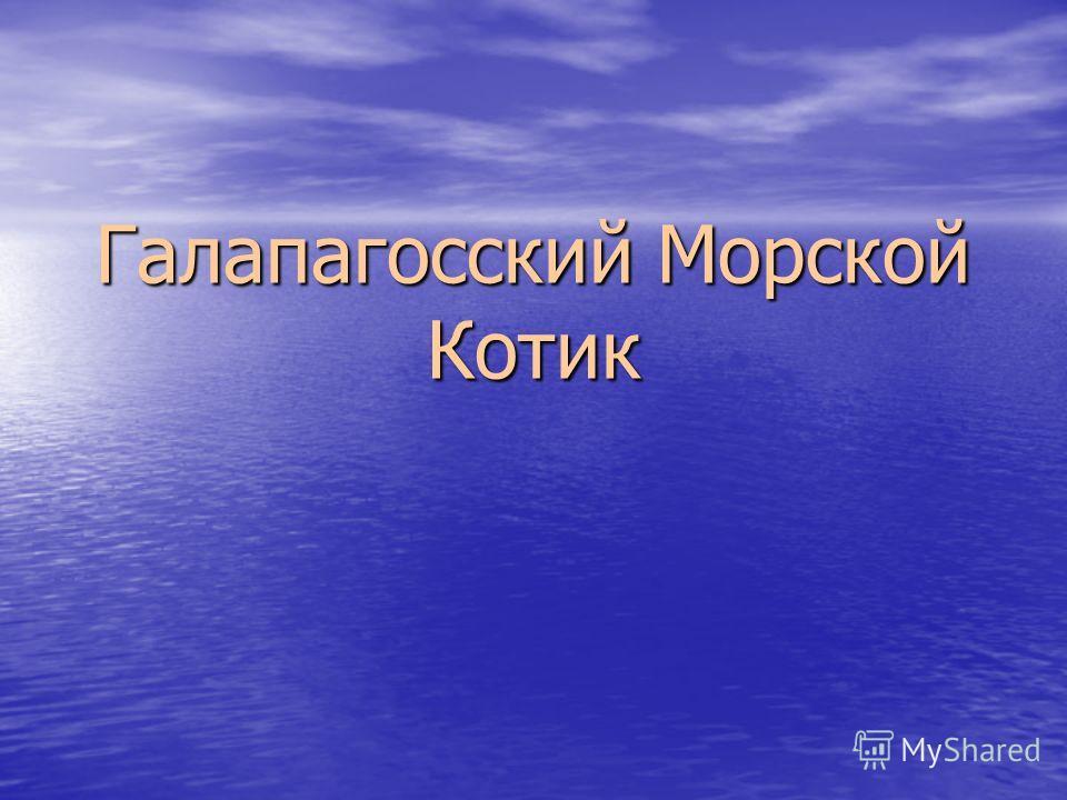 Галапагосский Морской Котик