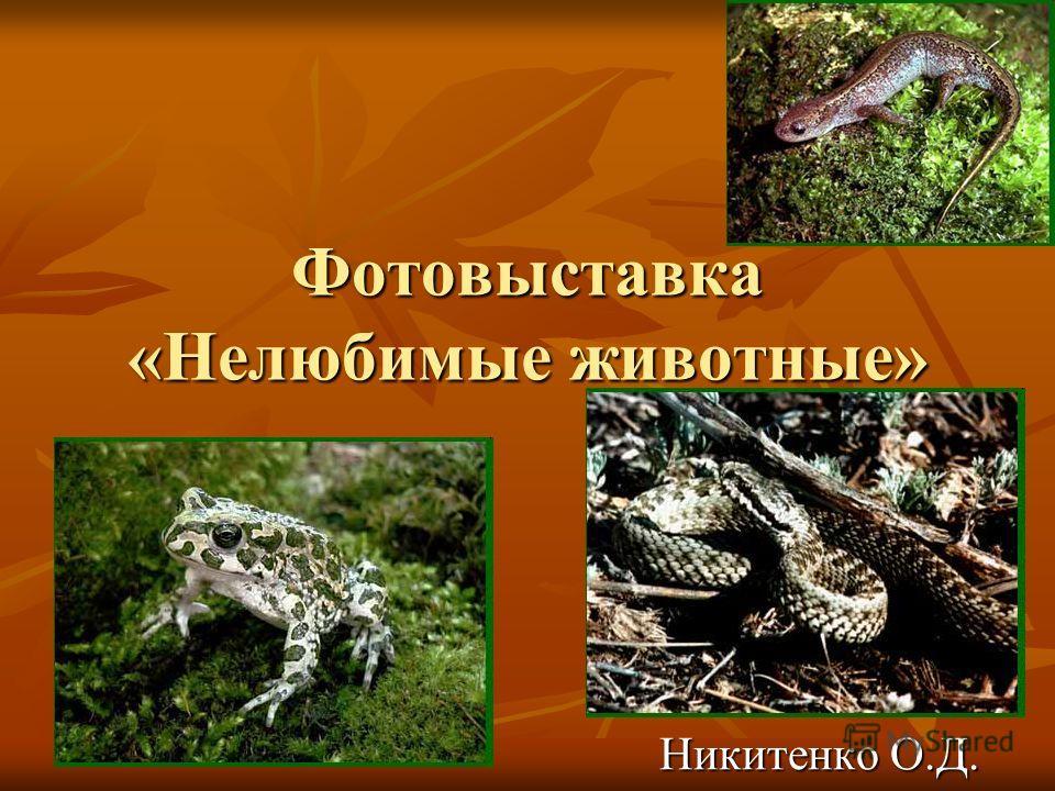 Фотовыставка «Нелюбимые животные» Никитенко О.Д.