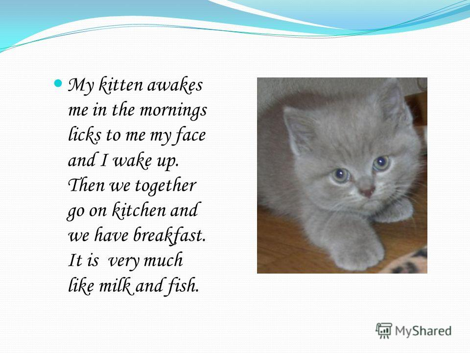 My kitten awakes me in the mornings licks to me my face and I wake up. Then we together go on kitchen and we have breakfast. It is very much like milk and fish.