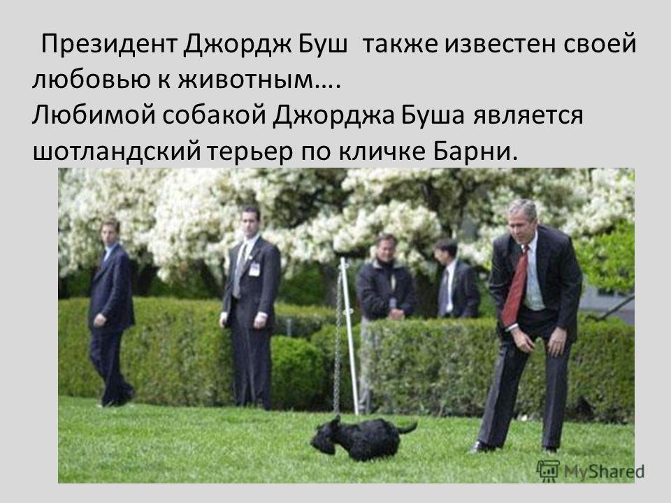 Президент Джордж Буш также известен своей любовью к животным…. Любимой собакой Джорджа Буша является шотландский терьер по кличке Барни.